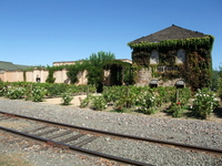 Napa Valley wineries and the line Stock photo [1850270] America
