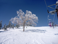 Skiing Stock photo [1851847] Skiing