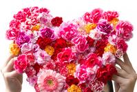 Heart-shaped Carnation Stock photo [1852872] Carnation