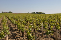 Bordeaux vineyards Stock photo [1852942] France