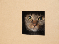 Cat to issue a face from the hole Stock photo [1855861] Kitten