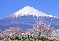 Spring Mount Fuji Stock photo [1967380] Mt.