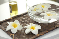 Plumeria Stock photo [1970971] Este