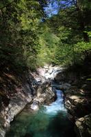 新緑の面河渓