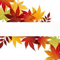 Autumn leaves background [2070317] Autumn