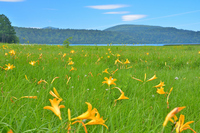 Summer of Oze and Hemerocallis Stock photo [2073333] Fukushima