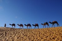 [World Heritage] Sahara camel stock photo