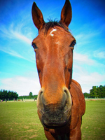 Up of horse Stock photo [2077656] Horse