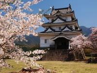 Sakura bloom Uwajima Castle Stock photo [2077820] Uwajima
