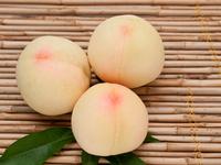 Shimizu white peach Stock photo [2081827] White