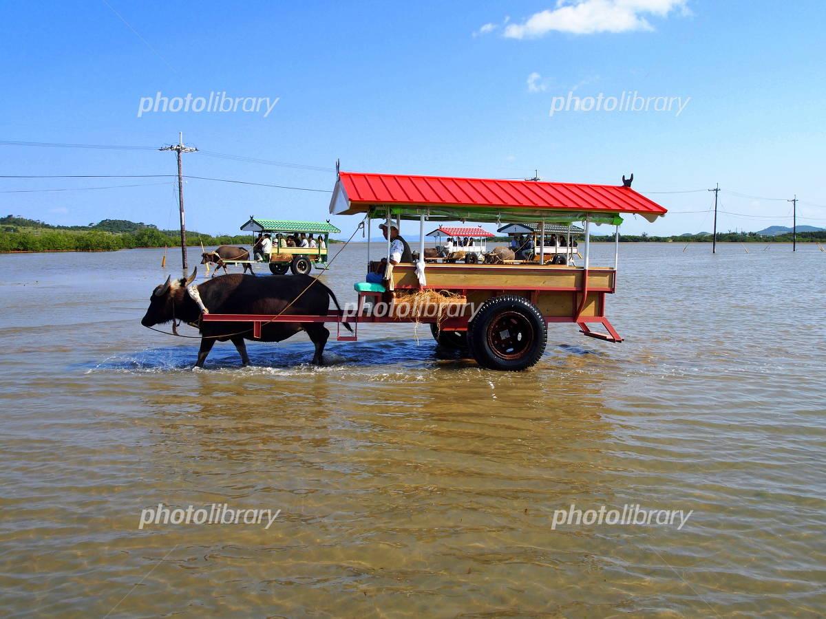Buffalo car Photo
