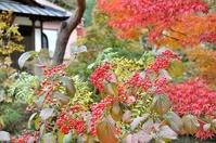 大谷寺の紅葉