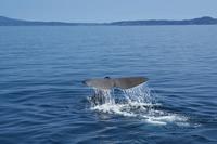 Sperm whale Stock photo [2175649] Hokkaido