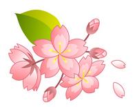 Cherry [2299330] Sakura