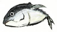 Tuna [2308429] Tuna