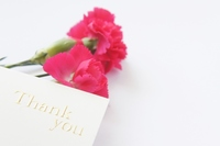 Carnation message white back Stock photo [2312089] Carnation
