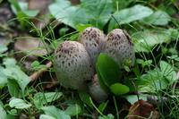 Mushroom Stock photo [65805] Mushroom