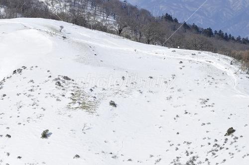 雪稜の箒杉沢ノ頭 写真素材 [ 2435269 ] - フォトライブラリー ...