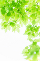 Frame of young leaves Stock photo [2428548] Fresh