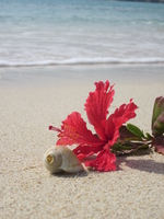 Sea and hibiscus Stock photo [2428634] Hibiscus
