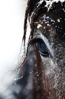Winter horse Stock photo [2439385] Animal