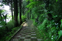 Fresh green is beautiful Hakone Lake Ashi promenade Stock photo [2550443] Hakone