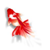 Goldfish summer greeting [2551730] Goldfish