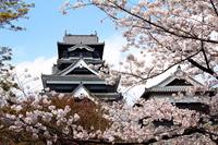 Spring of Kumamoto Castle Stock photo [2553285] City