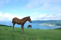 Miyazaki Cape Toi of wild horses Stock photo [2556486] Cape