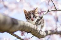Cat and cherry Stock photo [2556724] CAT