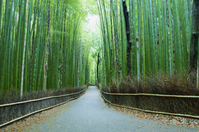 Sagano bamboo forest road stock photo