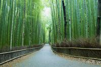 Sagano bamboo forest road Stock photo [2557590] Bamboo