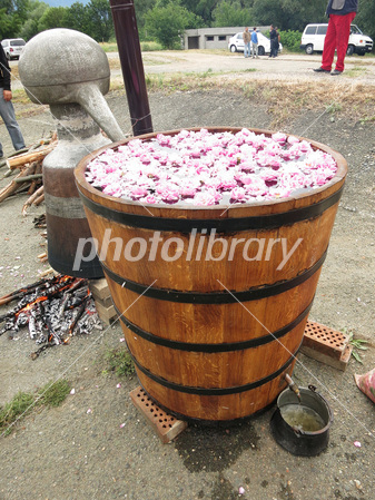 Distilled demonstration of rose oil in the rose festival Photo