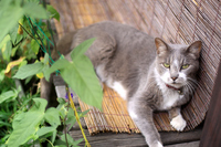 Cat relaxing in the bench in summer Stock photo [2658643] Miinoie