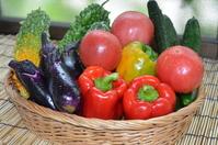 Morning picking super fresh summer vegetables Stock photo [2665707] Vegetables