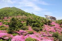Miyama Kirishima Stock photo [2743759] Plant