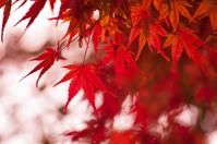 Maples Stock photo [2828440] Autumn
