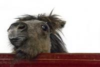 Horse's nose Stock photo [2829261] Horse