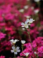 White Serasuchiumu Stock photo [2831013] Serasuchiumu