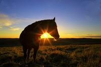Asahi and horses Stock photo [2837233] Morning
