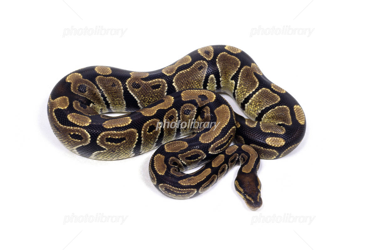 幼蛇の写真