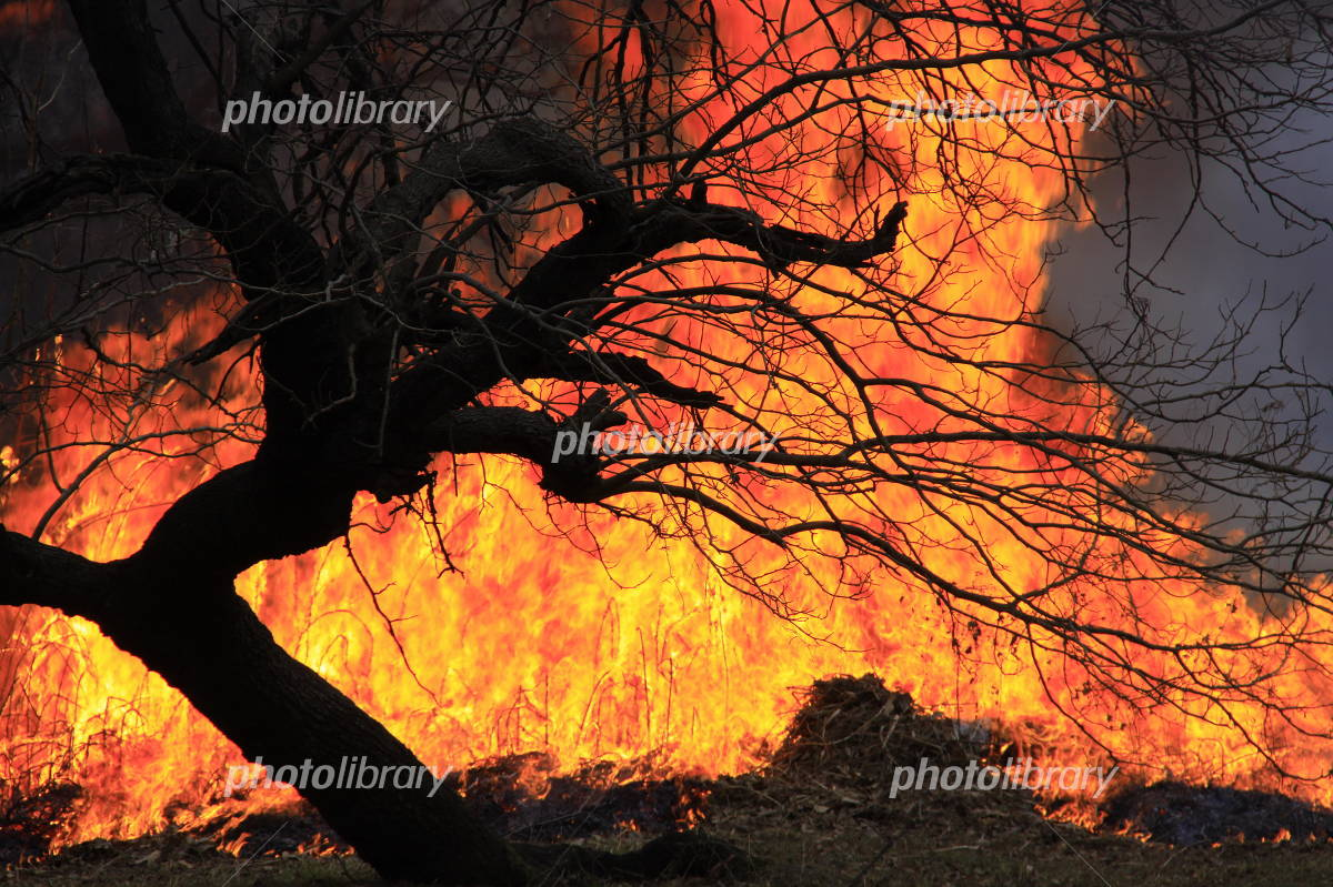 Trees and flame Photo