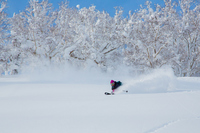 Powder ski Stock photo [2910838] Powder
