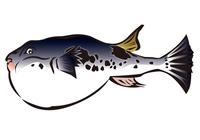 Blowfish illustrations of [2912196] An