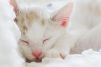 Kitten during sleep Stock photo [2914383] Kitten