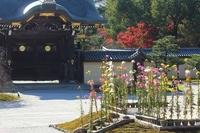 Kyoto Daikakuji Saga chrysanthemum and To-mon Stock photo [2914566] Daikakuji