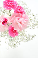 Pink carnation bouquet Stock photo [2915071] Mother's