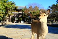 Todaiji Temple Namdaemun and Nara deer Stock photo [2915114] Deer