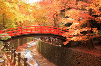 Autumn leaves of Kitano Shrine stock photo