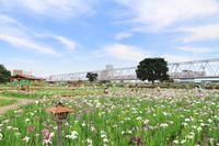 Iris and Keisei train Stock photo [2919738] Park